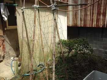 yugao2019-4.jpg